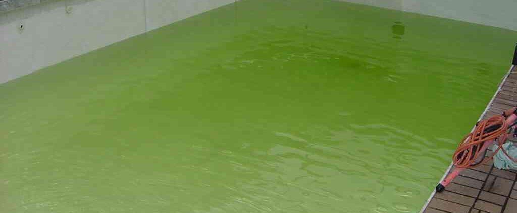 eau piscine verte